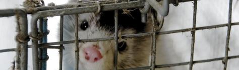 Praktilisest abist loomade eestkosteni