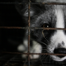 The Invisible Animals organisation: Help us put a stop to the imprisonment and killing of animals for fur!