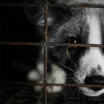 Организация «Невидимые животные»: Помогите прекратить заточение и убийство животных с целью получения меха!