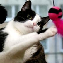 Loome kasside heaks uusi ja ägedaid käsitööesemeid!
