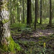 """Eestimaa Looduse Fond """"Aita kaitsta Eesti metsa!"""""""
