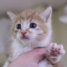 Тартуского приюта для бездомных животных: МЕНЬШЕ НЕНУЖНЫХ ДОМАШНИХ ЖИВОТНЫХ И БОЛЬШЕ ДОМОВ ДЛЯ НИХ