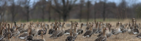 Heade tegude päeval annetati ornitoloogiaühingule 193 linnufotot