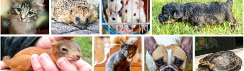 Ülevaade: Eesti Loomakaitse Seltsi tegevused juulis 2015
