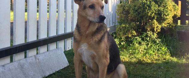 Aitame ravida Pärnu tänavatel elanud koera