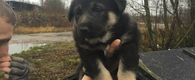 Puppy need home!