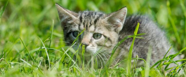 Saaremaa Pet Shelter: help us take care of pets in Saaremaa