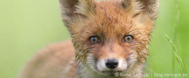 "Проект НКО Loomus ""Я за животных""."