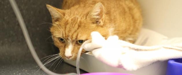 Aita meil aidata Paldiski hüljatud kassi!