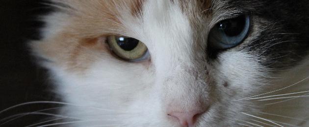 """MTÜ Saaremaa Lemmikloomade Turvakodu: """"Märka looma enda kõrval, hooli ja aita!"""""""