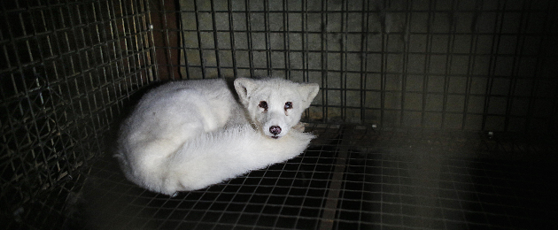 Help to stop raising animals for fur in Estonia