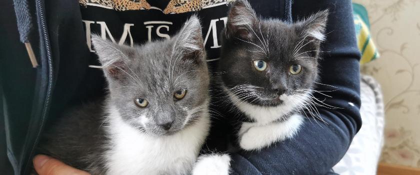 Tallu elama kolinud kassipere vajab abi