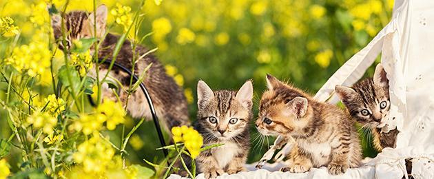 """Eestimaa Loomakaitse Liit: """"Aita päästa vigastatud, hüljatud ja väärkoheldud loomi!"""""""