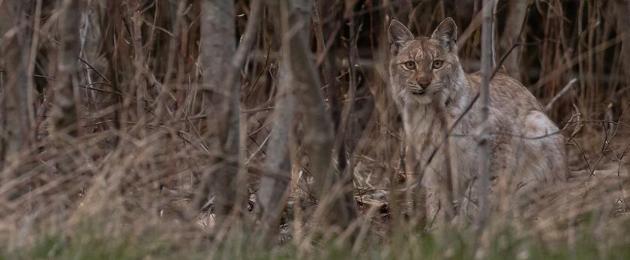 Estonian Fund for Nature: Help preserve Estonian nature!