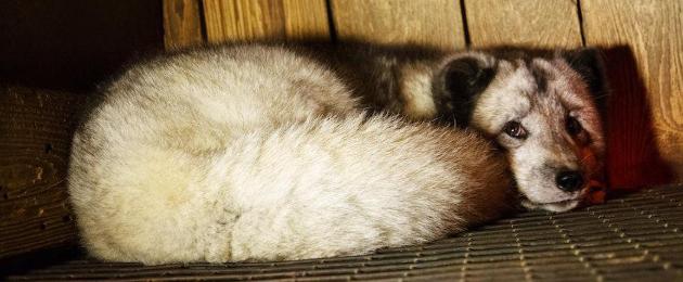 MTÜ Nähtamatud Loomad: Aita lõpetada loomade vangistamine ja tapmine karusnaha saamiseks!