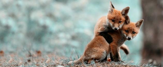 Päästame koos loomad kannatustest!