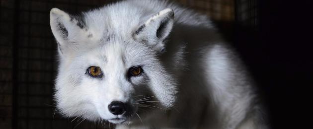 """MTÜ Loomus projekt """"Olen loomade poolt"""""""